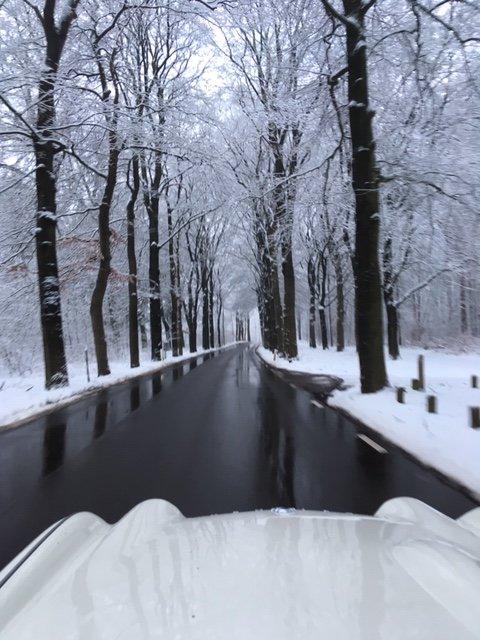 IMG_3699 tr winter.JPG