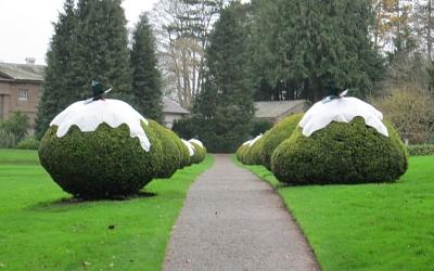 Festive shrubs