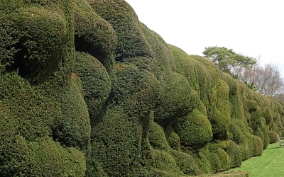 The Wibbly Wobbly Hedge