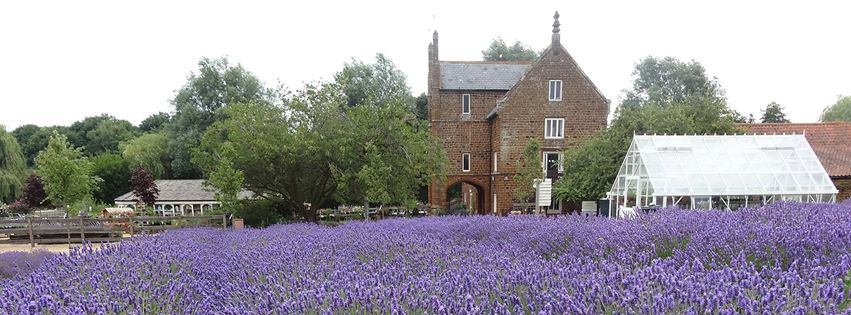 Camb Followers- Norfolk Lavender, Heacham.