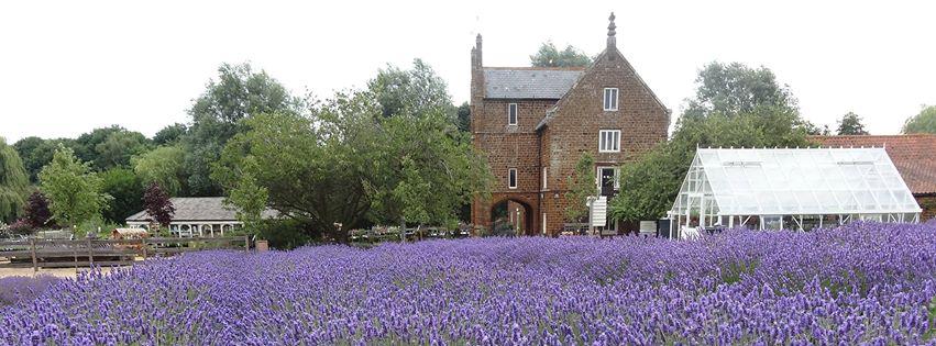 Camb Followers- Norfolk Lavender, Heacham.
